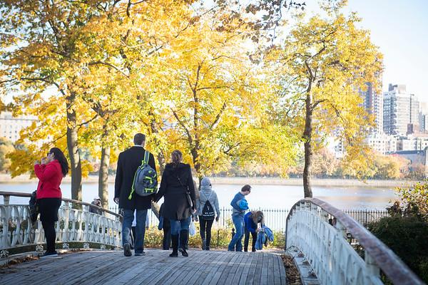 Toms Central Park Proposals