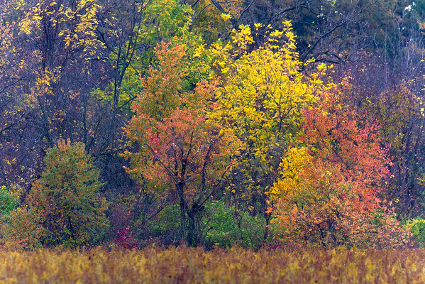 An Autumn Tapestry Of Colors At Carriage Hill Metropark Huber Heights Ohio 10-20-2016