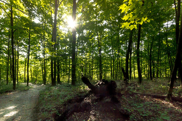 Hiking Through The Woods On A Sunny Sunday Morning At John Bryan State Park In Yellow Springs Ohio 8-28-2016