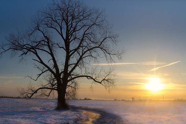 Sunlight & An Old Tree On A Cold Winter Morning In Champaign County Ohio 1-7-2017