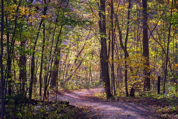 Autumn In The Woods At The Stillwater Prairie Preserve In Miami County Ohio 10-23-2016