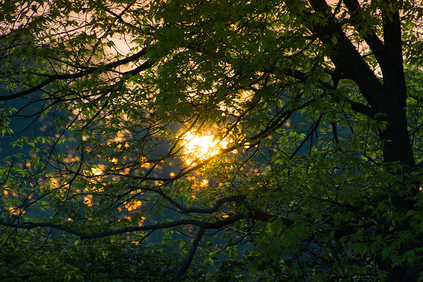 Feeling The Warmth Of The Rising Sun Through The Trees In New Carlisle Ohio 5-12-2016
