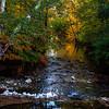 1-autumn reflections #15  10-9-2012 (1)-004