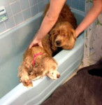 It's bath time for Taffy & Bailey!<br /> March 22, 2012