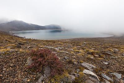 Blue Lake and dracophyllum, Tongariro Alpine Crossing, Tongariro National Park