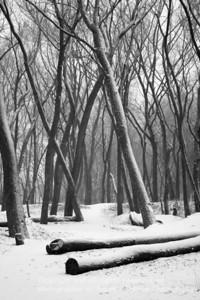 017-snowy_woods-nlg-15jan07-3917