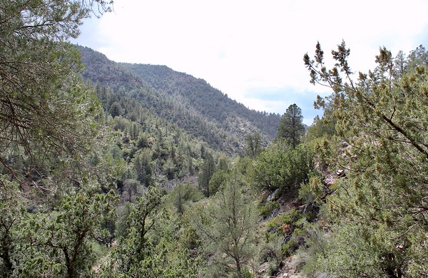 Looking down Pine Creek Canyon from the Gowan Trail (2018)