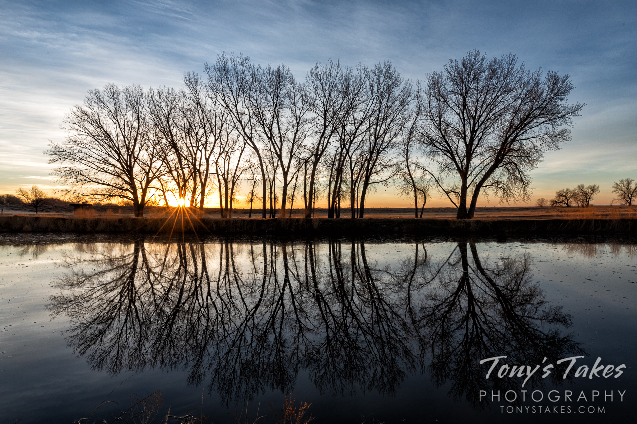 Silhouetted tree reflections at sunrise
