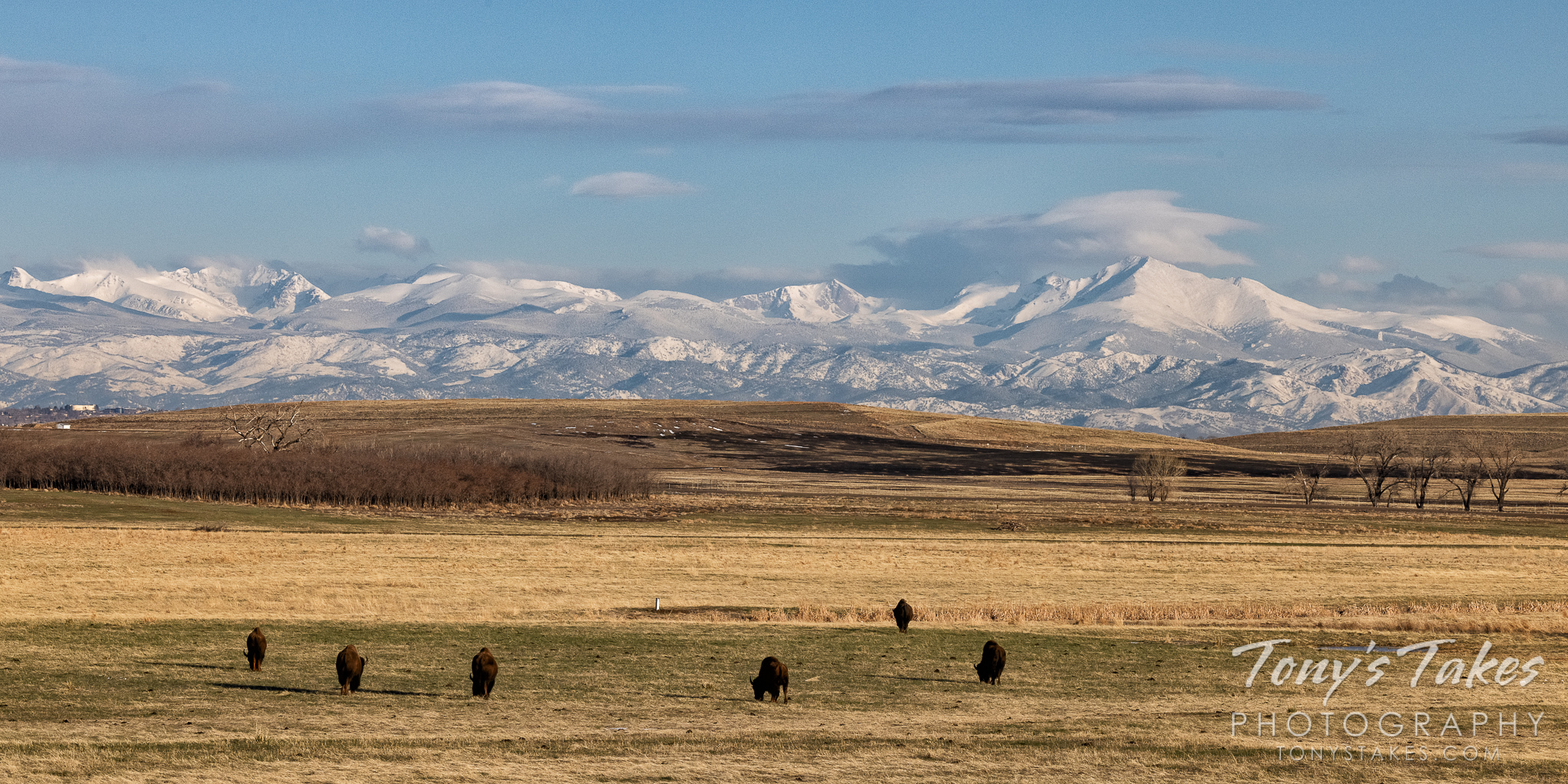 Bison graze with a scene showing the Great Plains to the Rocky Mountains