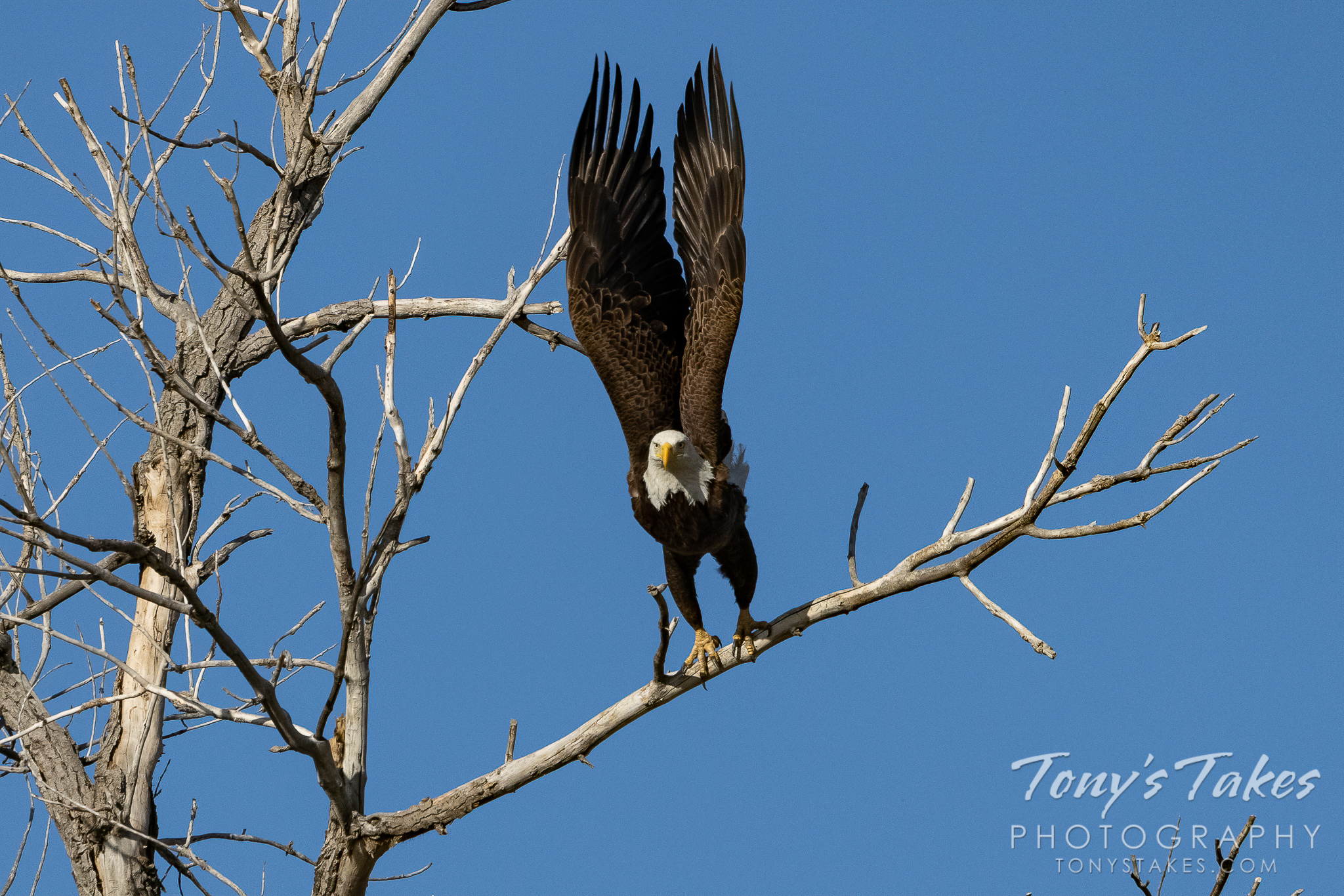 Lift 'em up and take flight, it's Freedom Friday!