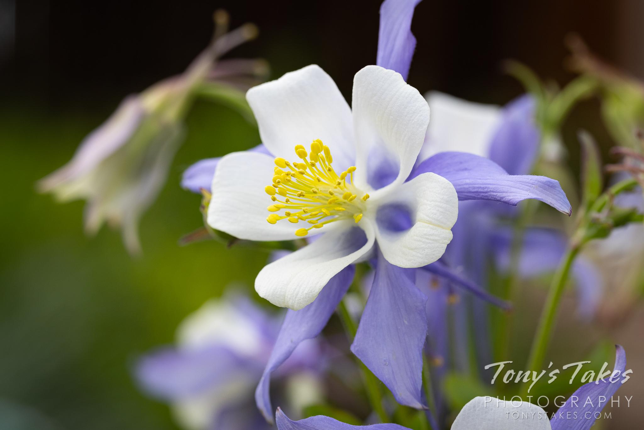 First springtime backyard flower photo session