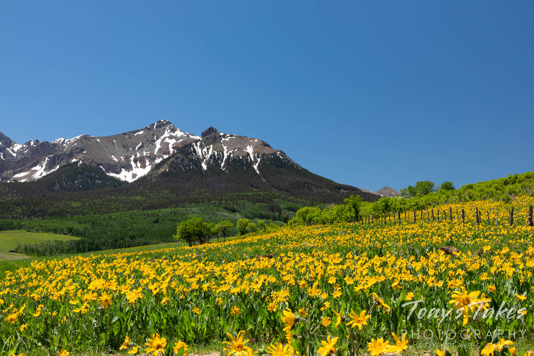 Wildflowers in the San Juan Mountains