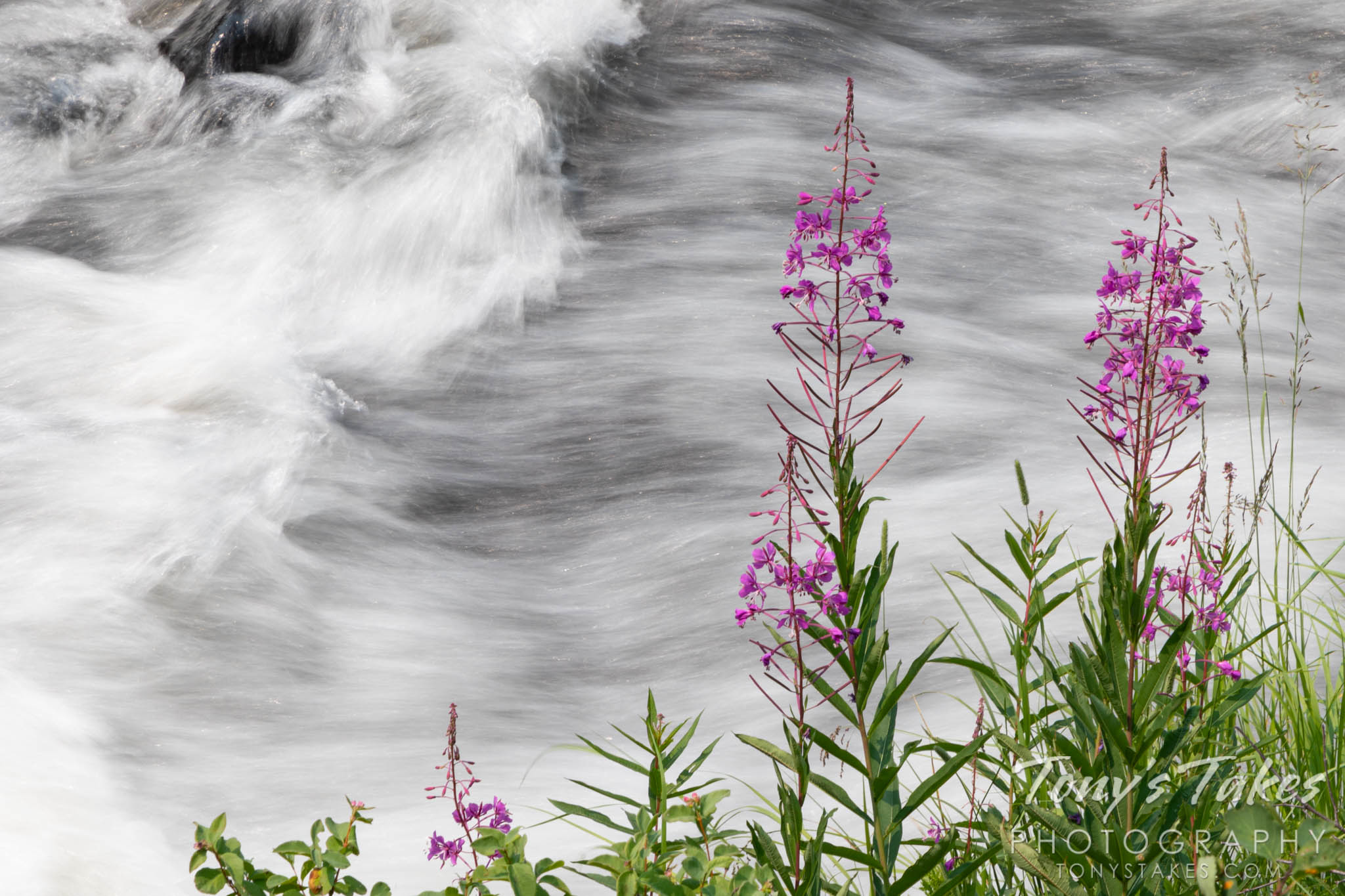 River rushes by fireweed