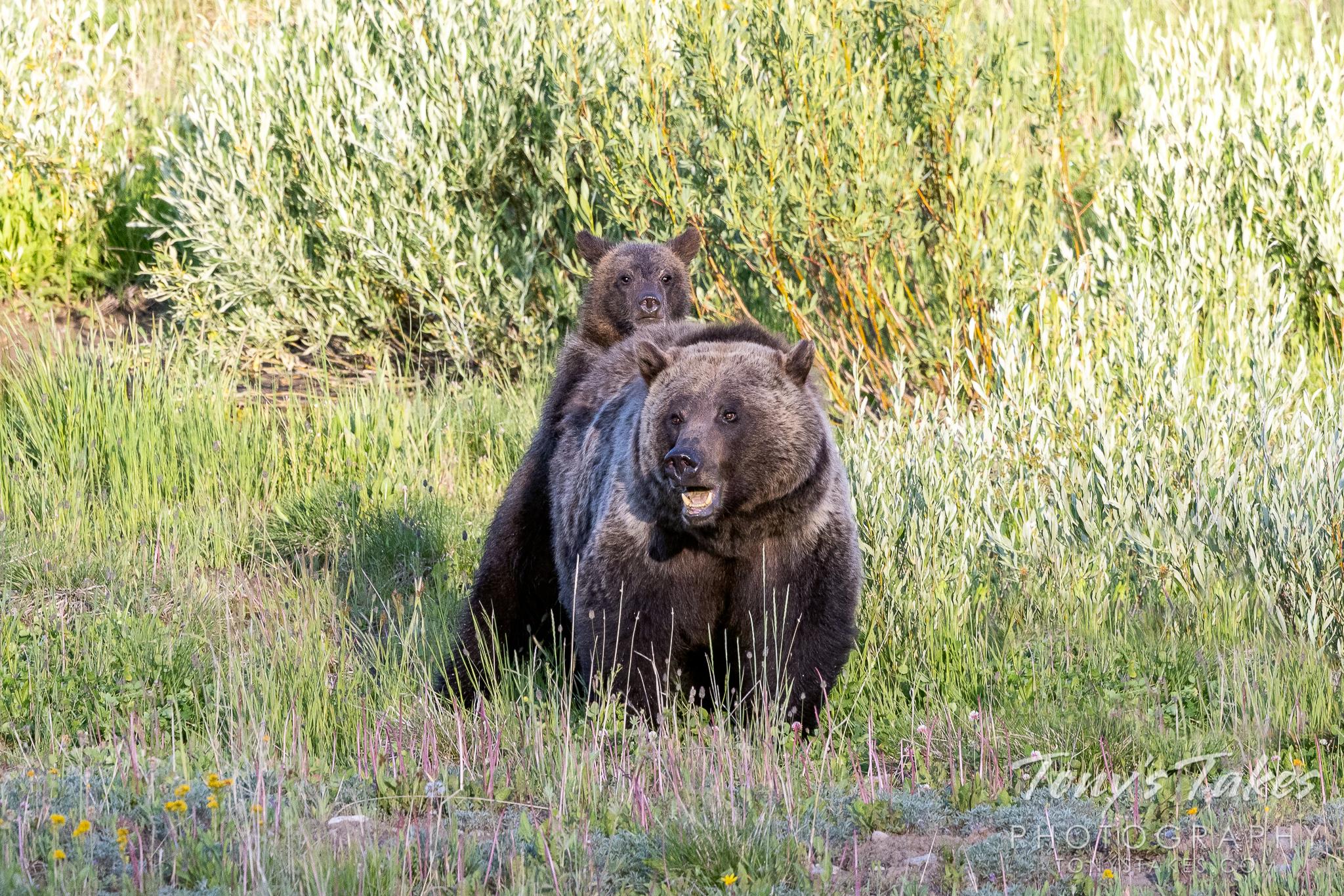 """We're bears, we don't ride piggyback!"""