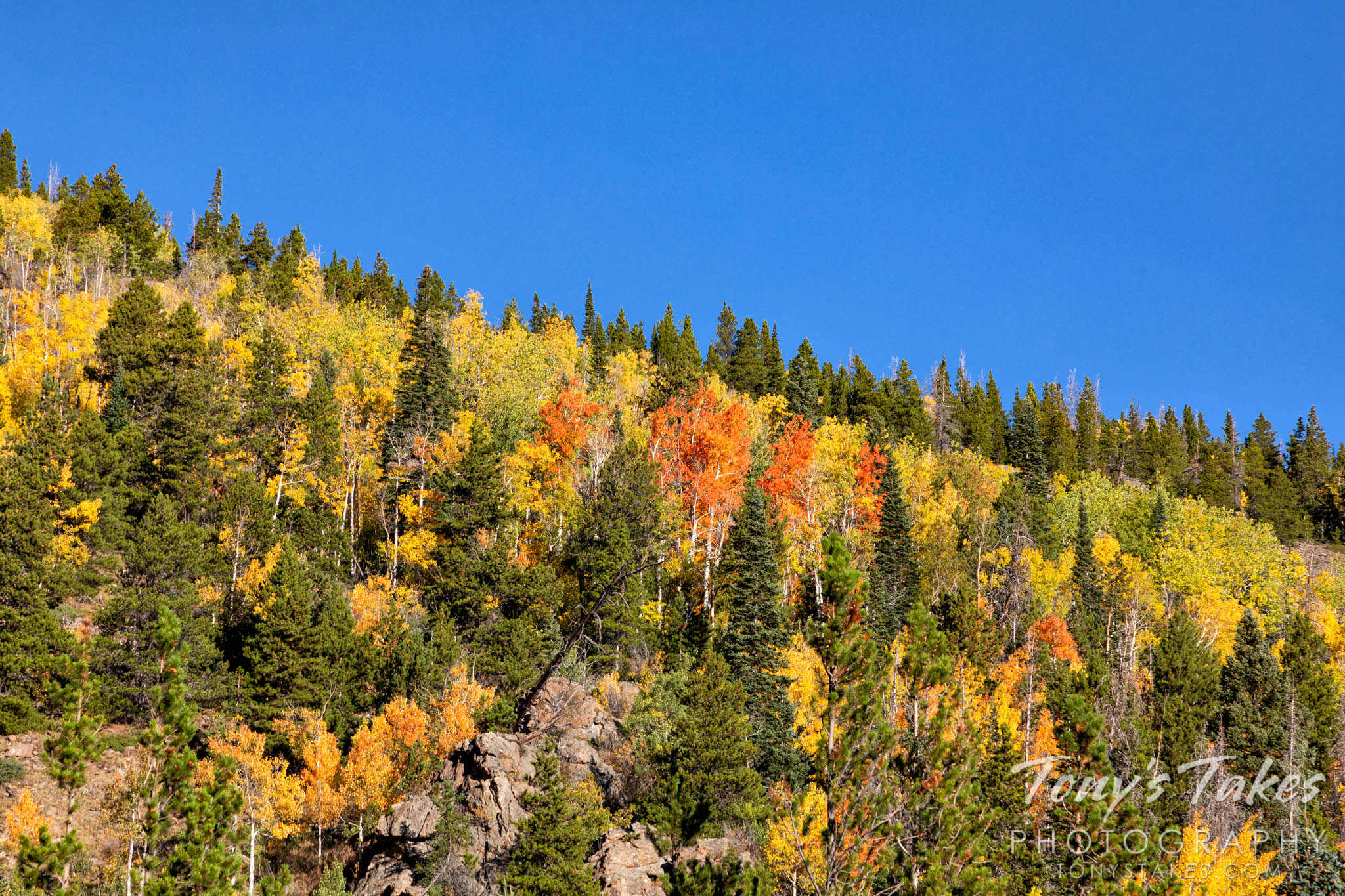Fall colors in the Hidden Valley area of Rocky Mountain National Park. (© Tony's Takes)