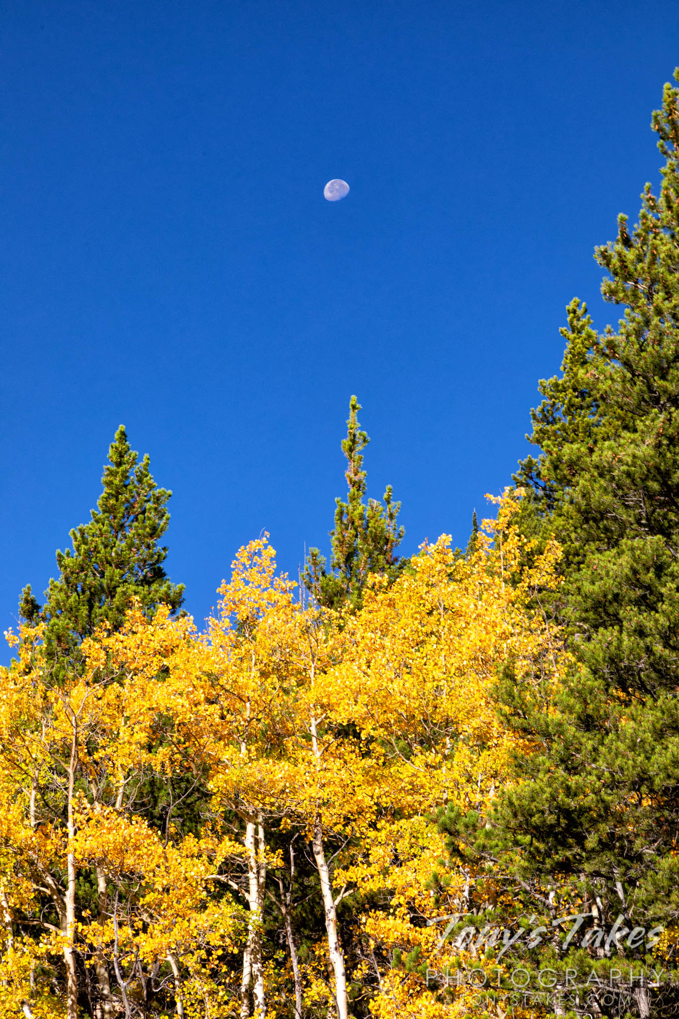 Fall colors and a setting moon in the Hidden Valley area of Rocky Mountain National Park. (© Tony's Takes)