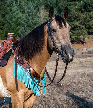 Toolin' Turquoise Leather Tack and Purse shoot 2017