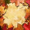 Autumn Framing_Square