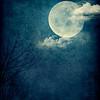 Blue Moon_Portrait
