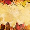 Autumn Framing_Landscape