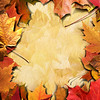Autumn Framing_Portrait
