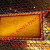 Restricted Entry_Landscape