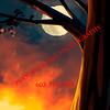 Glorious Evening_Poster Long