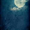 Blue Moon_Poster Long