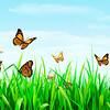 Butterfly Delight_Landscape