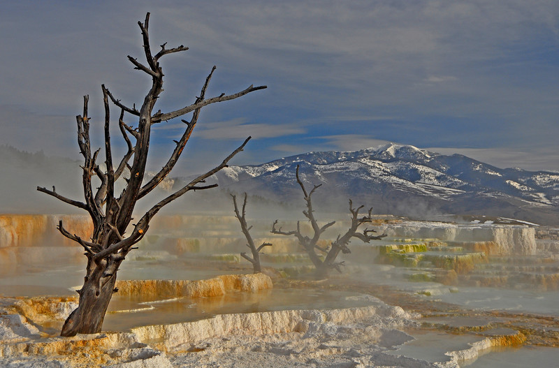 Canary Spring, Yellowstone  # 91-132