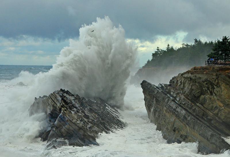 Shore Acres State Park, Oregon # 4583-11/18/11ed3