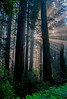 Redwood National & State Parks  # 18ed1