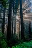 Redwood National & State Parks  # 18ed1