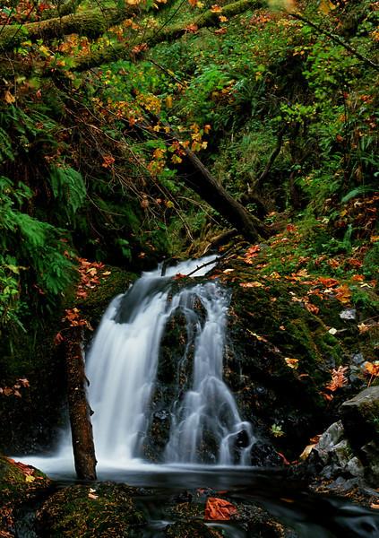 Sheppard's Dell Falls, Oregon, # 3