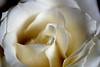 Flowers # 9-68