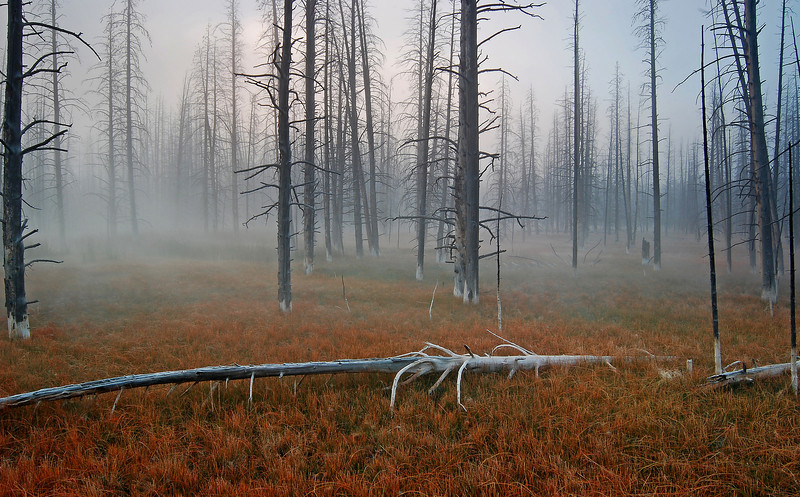 Fallen, Yellowstone # 43-91