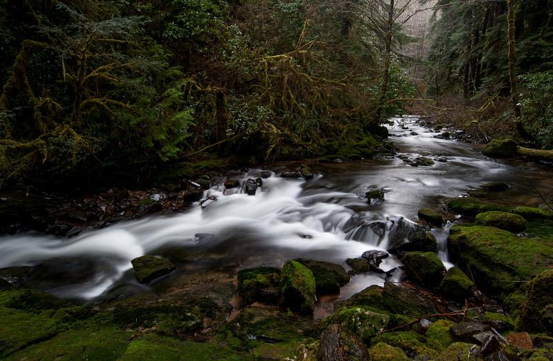 Siuslaw National Forest # 31 Beaver Creek