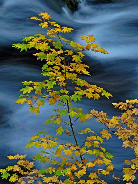 McKenzie River, Oregon # 78-055