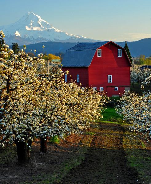 Hood River Valley, Oregon # 212-032ed2