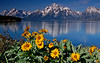 Colter Bay, Tetons # 389-56