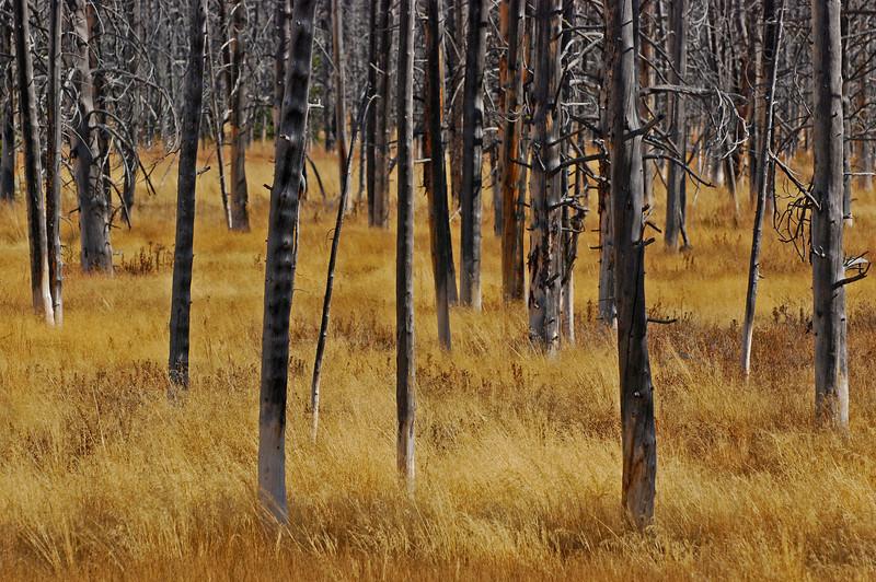 Yellowstone  # 81-268