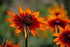 bee & flower # 1