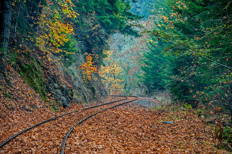 """Tracks"", Mapleton, Oregon # 6ed1"