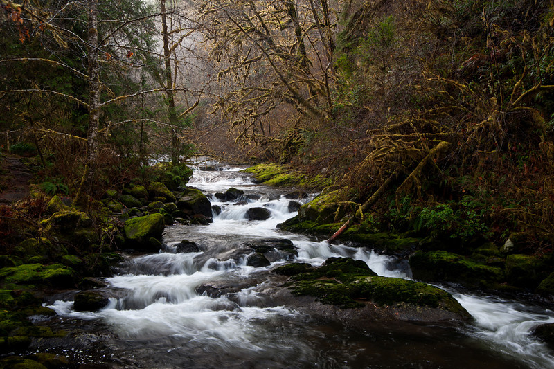 Siuslaw National Forest, Sweet Creek # 17