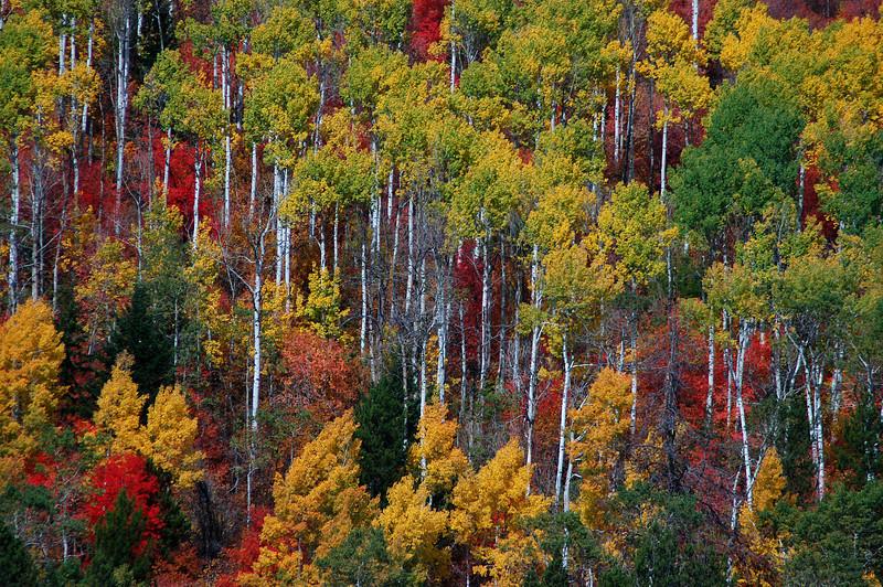 Palisades Autumn # 188-42