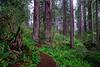 """""""Rhodies & Redwoods"""" RNSP  # 5ed1"""