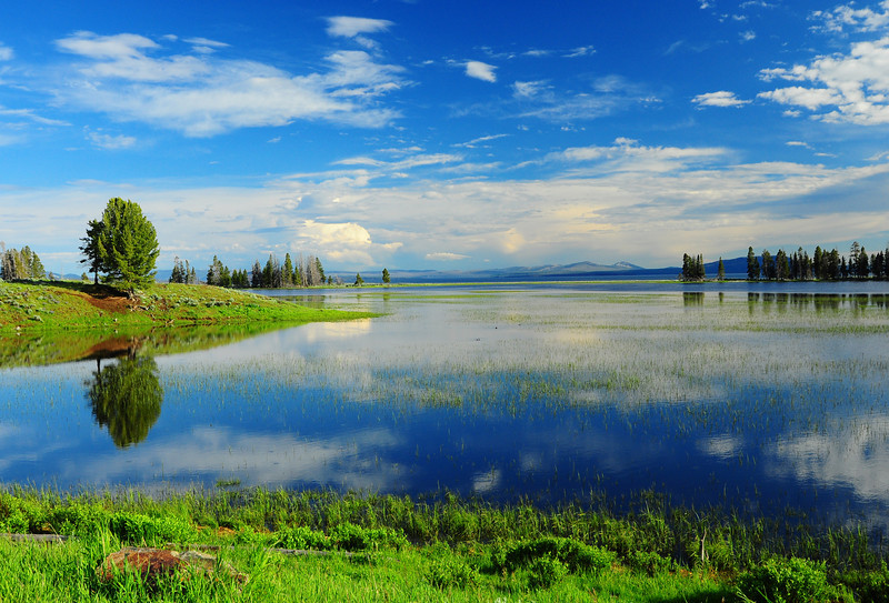 Pelican Creek, Yellowstone  # 185-243