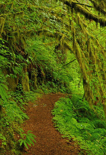 Kentucky Falls Trail, Oregon  # 61-7/16/11