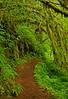 Kentucky Falls Trail, Oregon  # 61-7/16/11