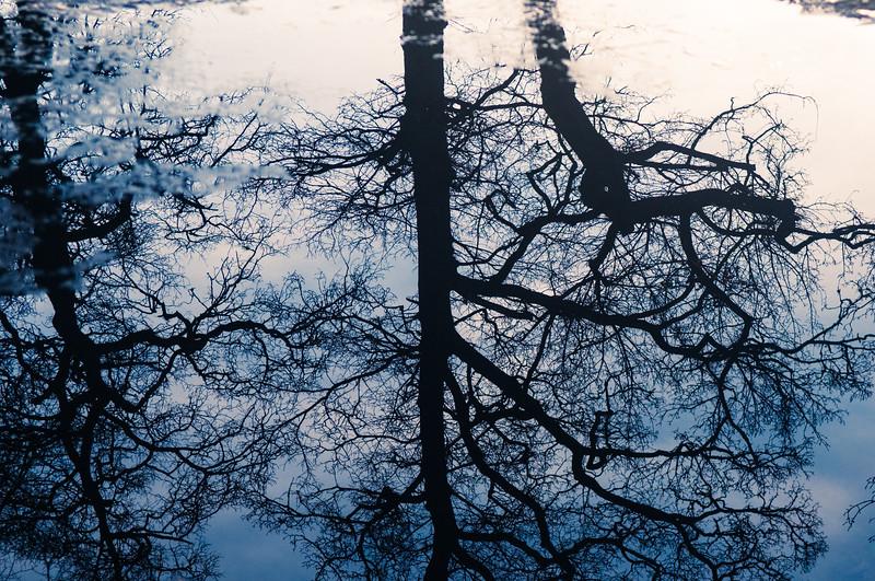 Banchory Tree